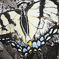 Callaway Tiger Swallowtail Butterfly by Beth Parrish