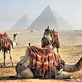 Camel And Pyramids, Caro, Egypt. by Oudi