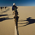 Camel Caravan And Their Shadows by Carsten Peter