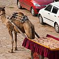 Camel Ready To Take Tourists For A Desert Safari by Ashish Agarwal
