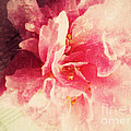Camellia Flower With Music by Ruby Hummersmith