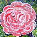Camellia by Patricia Taylor
