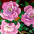 Camellias by Fram Cama