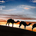 Camels - 2 by Okan YILMAZ