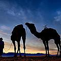 Camels  by Okan YILMAZ