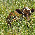Camo Cow by Rod Giffels