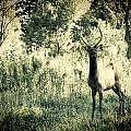 Camouflage Elk by Sheri Bartoszek
