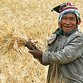 campesino cutting wheat. Republic of Bolivia. by Eric Bauer