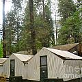 Campground Yosemite by Beth Saffer