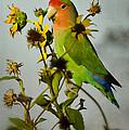 Can You Say Pretty Bird? by Saija  Lehtonen