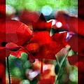 Canada Day by Andrea Kollo