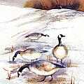 Canada Geese In Stubble Field by Peggy Wilson
