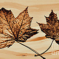 Canadian Leaf by Marsha Heiken