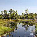 Canadian Wetland by Ted Kinsman