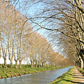 Canal With Tree by Teocaramel