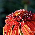 Candy Corn Cone Flower by Susan Herber