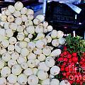 Candy  Sweet Onions by David Bearden