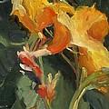 Canna by Elizabeth Taft