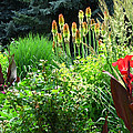 Canna Lily Garden by Gretchen Wrede