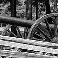 Cannon by Guy Whiteley