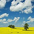 Canola Field And Clouds, Rathwell by Mike Grandmailson
