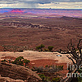 Canyonland Overlook by Robert Bales