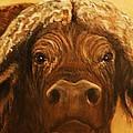 Cape Buffalo by Jody Domingue