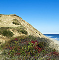Cape Cod Dune Cliff by John Greim