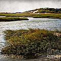 Cape Cod National Seashore by Joan  Minchak