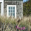 Cape Cod Summer by John Greim