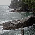 Cape Flattery Shoreline by Fred Russell