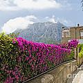 Capri Alleyway by George Oze