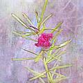 Captured Blossom by Judi Bagwell