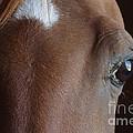 Caravaggio 02 by J M Lister