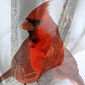 Cardinal Collage by Rick Rauzi