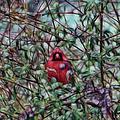 Cardinal Feb 2012 by Ericamaxine Price