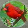 Cardinal Rings by Debra     Vatalaro