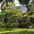 Caribbean Garden by Carol  Bradley