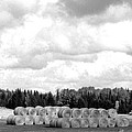 Cariboo Country Hay Bales by Will Borden