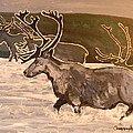 Caribou by John Connaughton