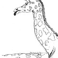 Caricature Sketch Of A Giraffe by Patrick Grills