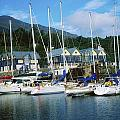 Carlingford Marina, Carlingford, County by The Irish Image Collection