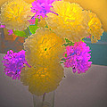 Carnation Glow by Debbie Portwood