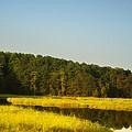 Carolina Morning by Bill Cannon
