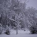 Carolina Snowfall by Travis Truelove