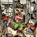 Carousel Cat by Wayne Sherriff
