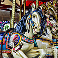 Carousel Horse 2 by Paul Ward