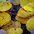 Carpet Of Gold by Brian Kerls