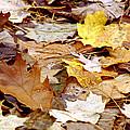 Carpet Of Leaves by LeeAnn McLaneGoetz McLaneGoetzStudioLLCcom