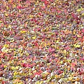 Carpet Of Leaves by Yumi Johnson